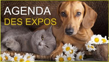 Agenda des Expositions et des Foires Artisanales
